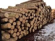 Оптовые поставки леса из Восточного Казахстана