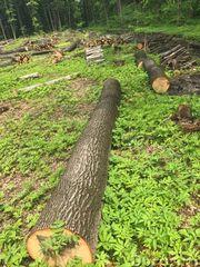Делаем поставку леса из России
